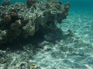 Sharm el Sheickh