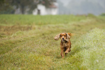 happy puppy dog running to you in autumn countryside