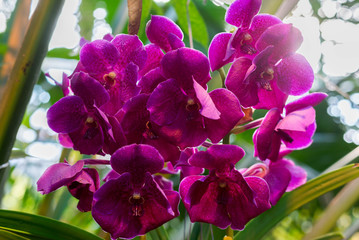 beautiful orchid in the room interior