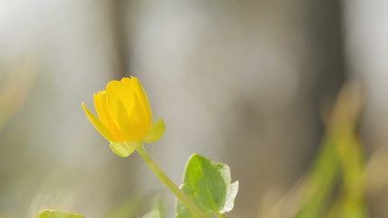 small yellow flower sways on the wind, made from raw