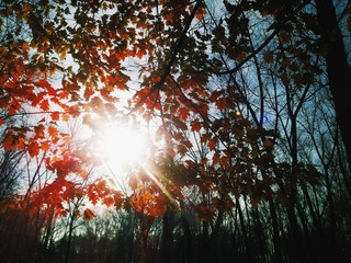 Sun shining through leafs on tree at autumn