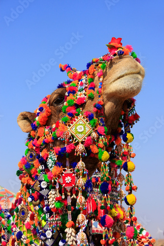Foto op Canvas Kameel Portrait of decorated camel at Desert Festival, Jaisalmer, India