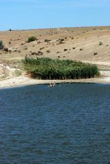 lake Springs
