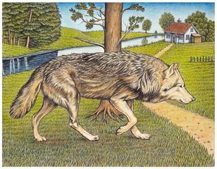 Wolf auf Beutezug