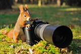 Fototapety Squirrel with big professional camera