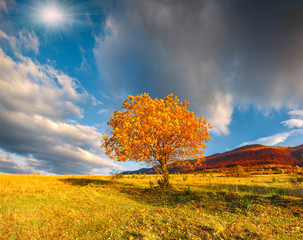 Lonely autumn tree against dramatic sky in the mountains
