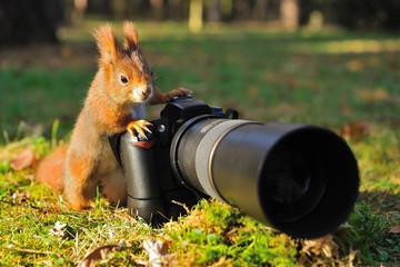 Squirrel with big professional camera