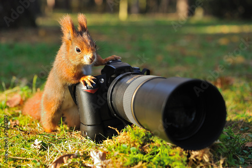 Deurstickers Eekhoorn Squirrel with big professional camera