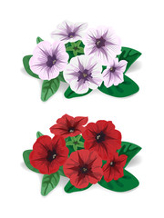 white and red flower bush petunia