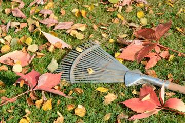 Laubrechen auf Wiese mit Herbstlaub
