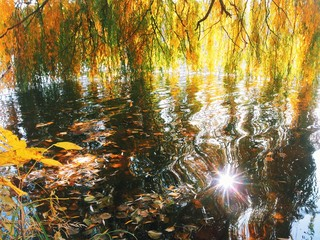 Sun reflection in water. Autumn yellow leaves around of it