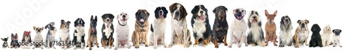 Foto Spatwand Hond group of dogs