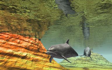 dauphin sous la mer