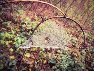 jesienna pajęczyna w rosie