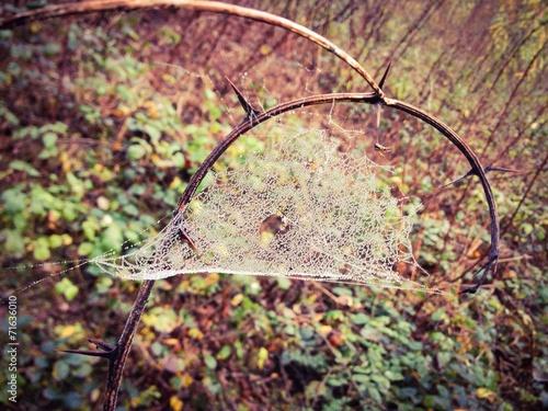 canvas print picture jesienna pajęczyna w rosie