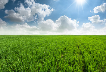 Fresh grass field with sun light and blue sky with clouds.