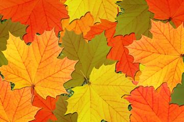 Herbstblätter, Hintergrund