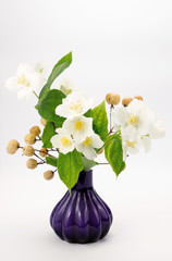 Jasmine flowers in vase isolated on white