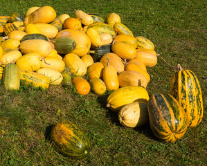 Piile of  pumpkins