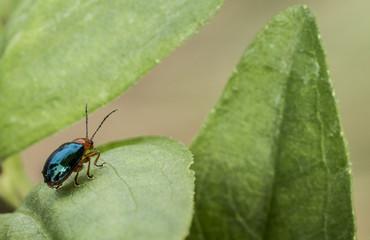 Piccolo insetto Colombiano
