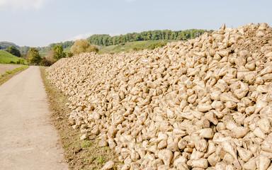Zuckerrübe, Landwirtschaft, Ernte, Waldweg, Herbst, Schweiz