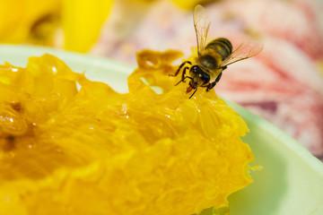 Bee gathering honey and nectar with proboscis.