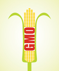 Genetically modified maize