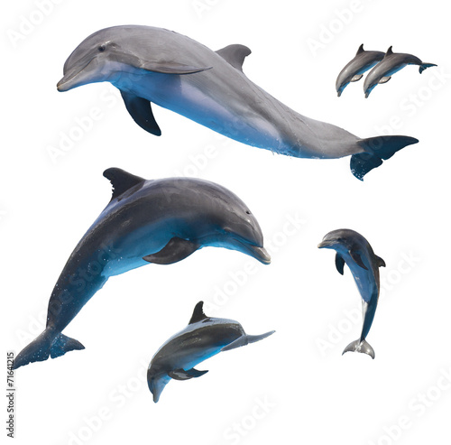 Spoed canvasdoek 2cm dik Zee / Oceaan jumping dolphins on white
