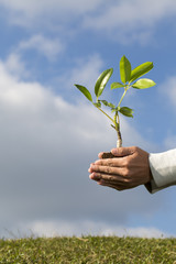 Tree in palm of hand - Stock Image