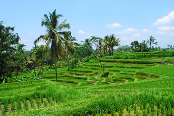 Eindrücke Bali