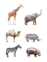 Great collection of big african mammals.