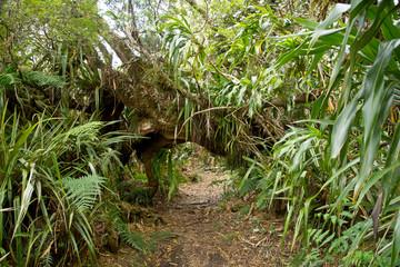 Regenwald auf der Insel Reunion