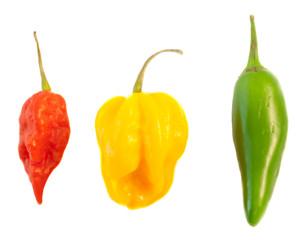 still life of chilli