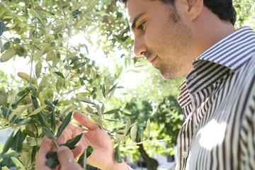 Hübscher Mann unter einem Olivenbaum