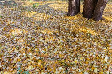 Fallen leaves in the park