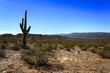 Cactus - 71652682