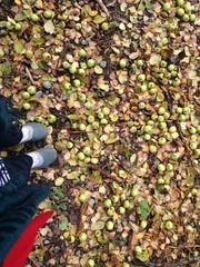 apple carpet
