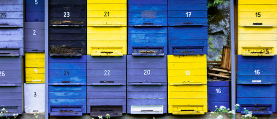 hive in blue and yellow