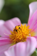 Blütenglück
