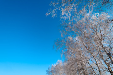 Bare winter forest covered with snow
