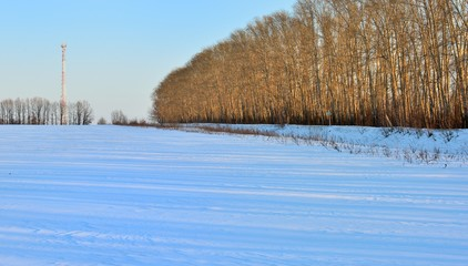 Bare winter forest covered with snow. Landscape.