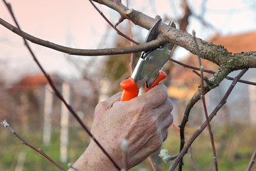 Agriculture, pruning tree branch in orchard closeup of hand