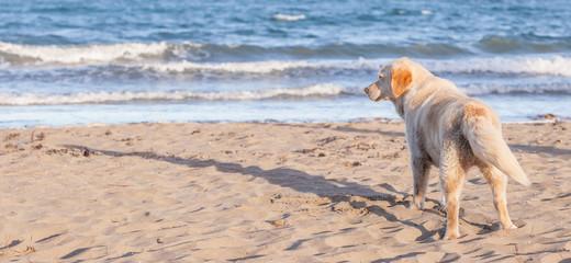 The dog is on a sandy beach overlooking tropical beach, Thailand