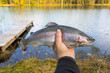 Rainbow trout in angler hand