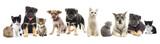Fototapety set pets