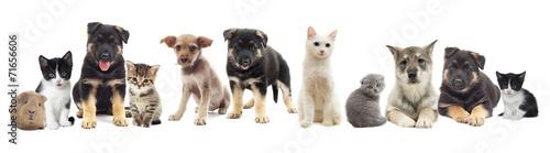 canvas print picture set pets