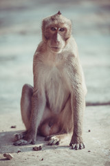 Monkey portrait
