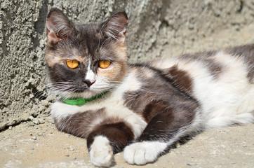 Кошка на улице.