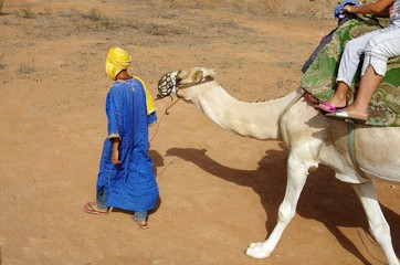 Balade en dromadaire (Maroc)