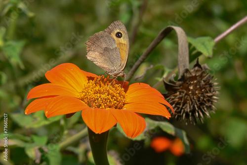 canvas print picture fiore arancione - ritratto